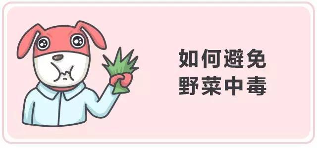 清明踏青都爱挖野菜,但为啥要吃野菜?