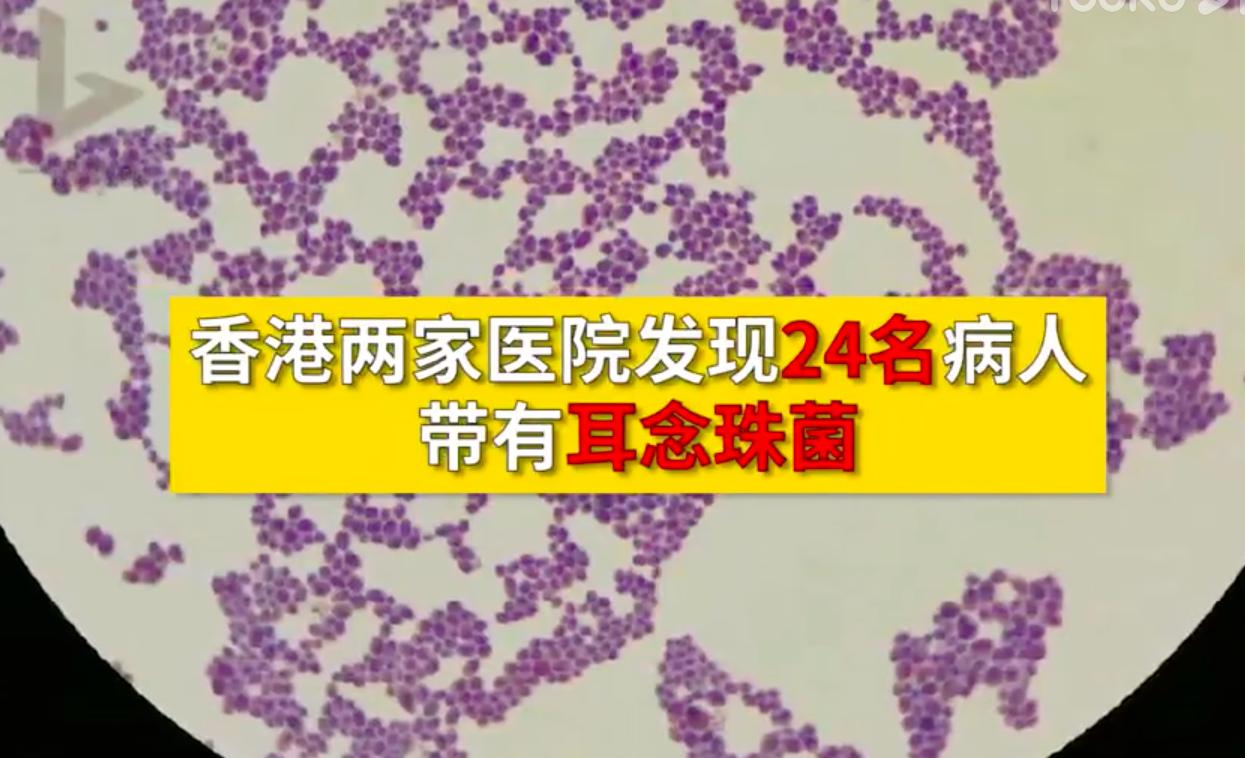 香港两家医院发现24名病人带有耳念珠菌