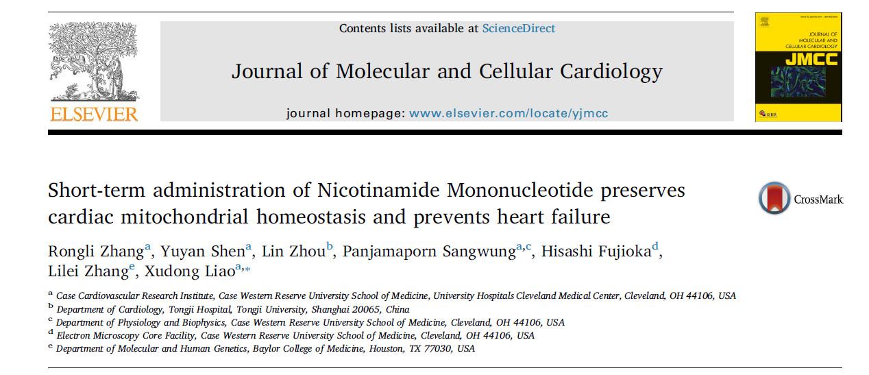 预防心衰,补充NMN改善心脏机能成新思路