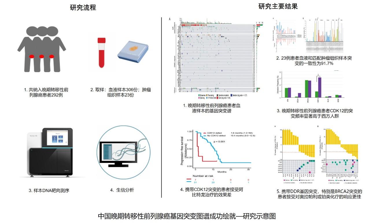 中国晚期转移性前列腺癌基因突变图谱成功绘就