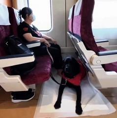 视障人士陈燕:让导盲犬带主人去更多更远的地方